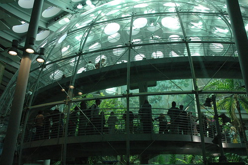 California Academy of Sciences - Rainforest