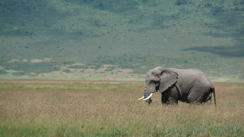 africa 245