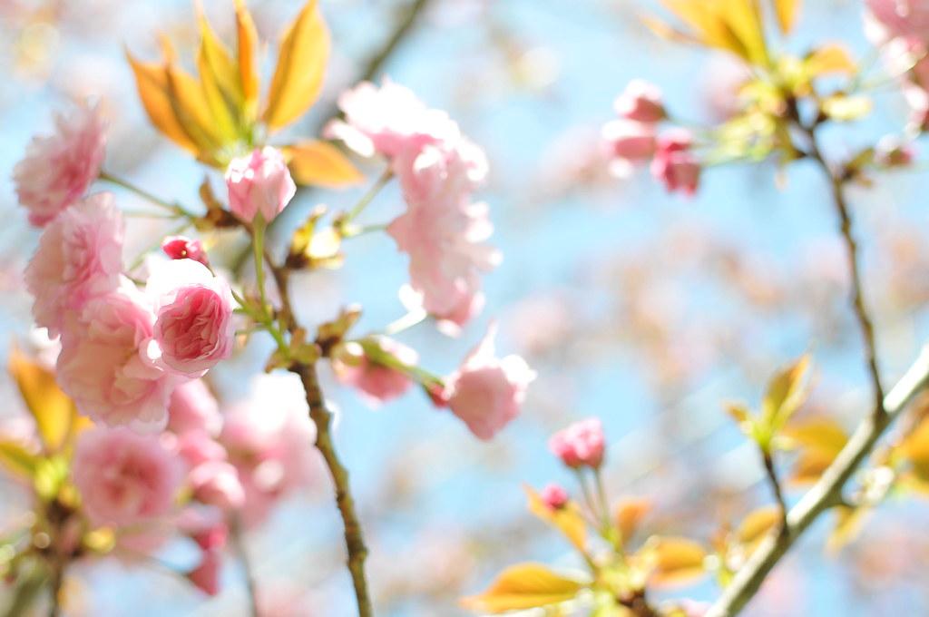 spring2010_69