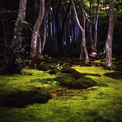 k (Kevin Tadge / Laura Lamp) Tags: trees 120 6x6 mamiya film japan mediumformat garden square temple moss kyoto kodak bamboo arashiyama portra gardener 120mm rb67 160nc gioji