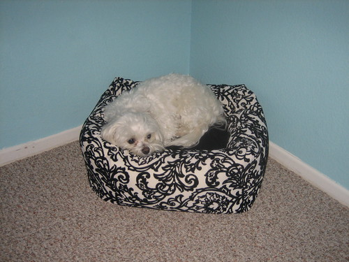 ilse loves her new bed! thanks mom and lisa!