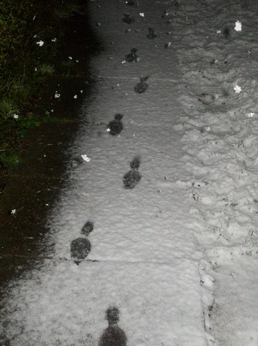 foot prints on the snow