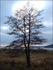tree (helena.e) Tags: lake tree water explore alingsås träd mjörn sjö helenae helenab