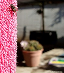 Lo salvaje & delicado (Felipe Smides) Tags: chile wild cactus detalle macro art textura fly arte details flor curacaví felipe texturas mosca momentos toalla delicado salvaje artisticexpression desahogo instantfave mywinners abigfave aplusphoto beatifulcapture artlegacy smides fotografiasmides funfanphotos felipesmides
