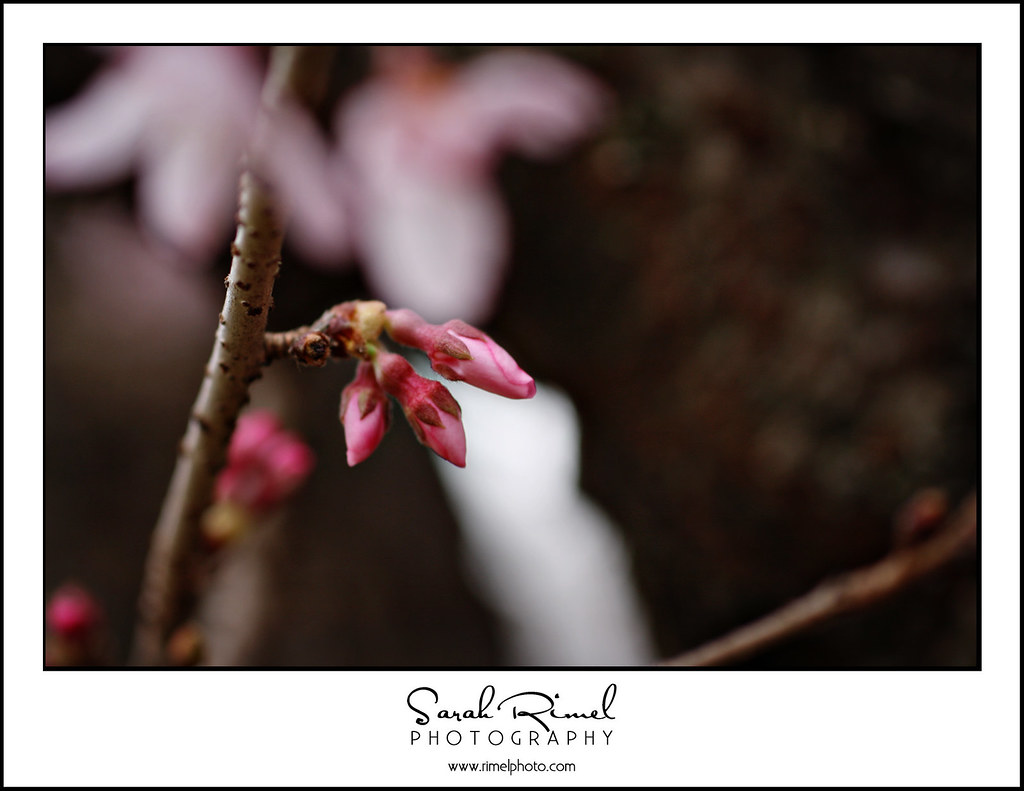 buds and blooms 11