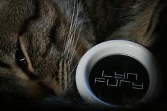 Cat's Lyn