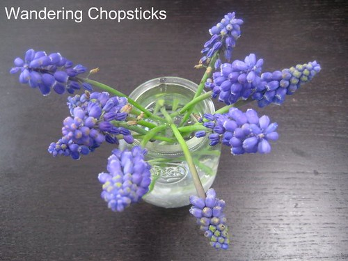 3.18 Grape Hyacinth 2