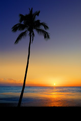 Leaning Sun Palm (Surrealize) Tags: ocean sunset sea sky orange sun reflection tree beach water leaves silhouette hawaii nikon colorful purple sundown waikiki oahu palm gradient handheld leaning hdr 9exp d700 surrealize