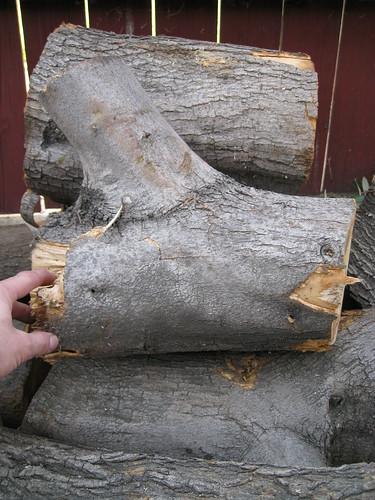 European olive logs