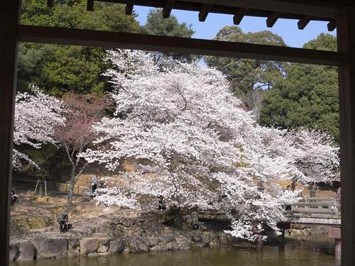 09-04-06【桜】@浮見堂(奈良公園)-04