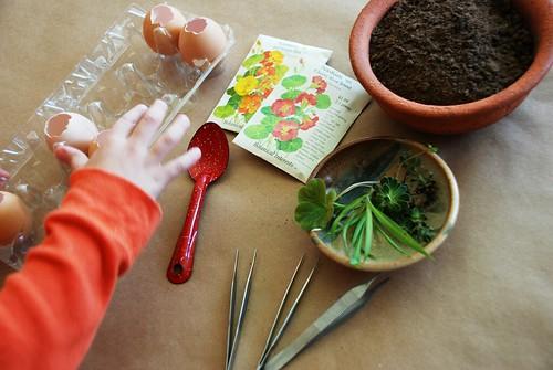 Egg-Plants