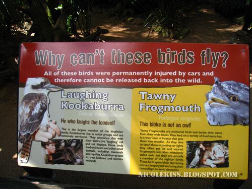 kept birds