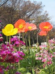 Japan - Day 2 (~*mae*~) Tags: japan 2009 landoftherisingsun