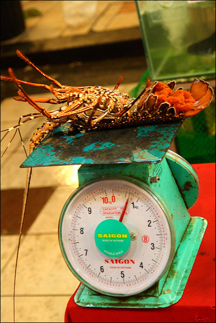 weighing-lobster