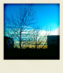 275 (Georgios Karamanis) Tags: blue sunset sky tree clouds polaroid sweden branches uppsala sverige 365 twigs iphone polarize projec karamanis