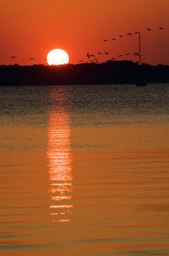 sunrise_birds_0258