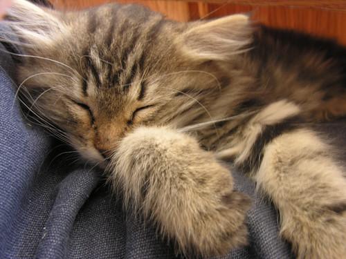 Fel ne ébreszd az alvó oroszlánt!