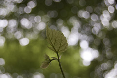 Facing the dream [May2 2009] (iM@n) Tags: green leaf solitude bokeh dream nederland thenetherlands p iranian effervescent awe ایران brabant courage سبز ایرانی برگ swesome