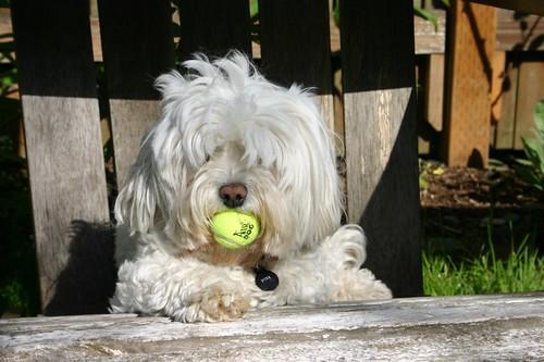 Ball? What ball?