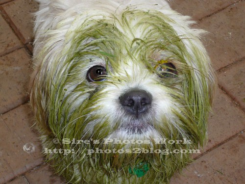 Zak The Greenn Dog
