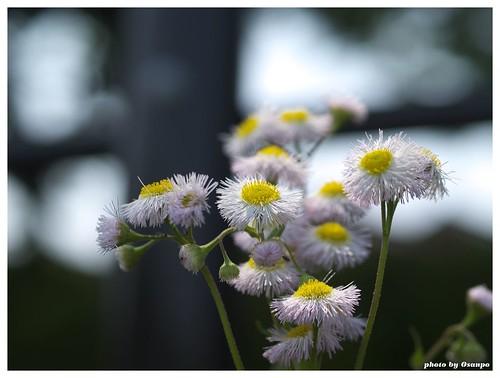 Flowers 20090510 #01