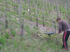 The Mosel: Plow Sledding