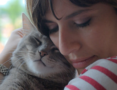 l'amore ha mille facce (giulifff) Tags: cats love explore perla chiara amore gatti explorefrontpage30