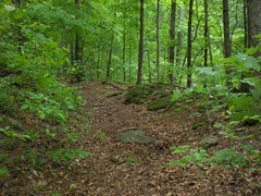 12 - Ward Gap Trail