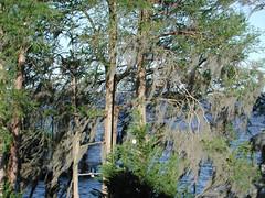 lake story 017 (shankargallery) Tags: landscapes nikon piers northcarolina lakeside spanishmoss lakescapes lakewaccamaw shankargallery richardlazzara clustershotcom