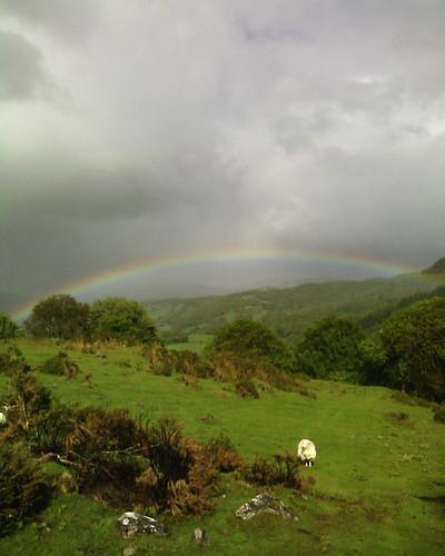 Rainbow with sheep