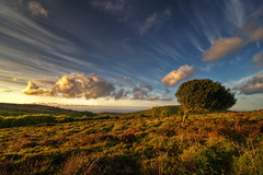 The Common (birel101 (jay)) Tags: sky clouds nikon somerset common quantocks aonb d90 thesecretlifeoftrees great123