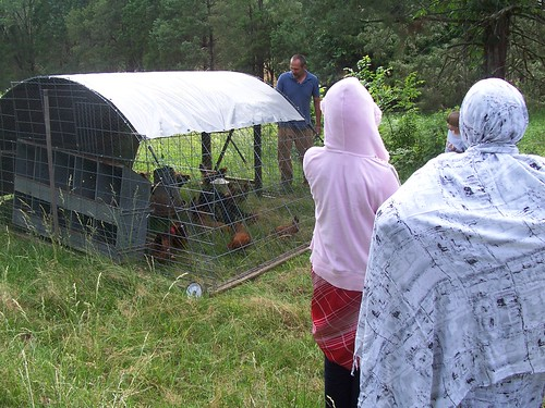 khadijah and hawa check out the chickens