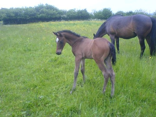 Yes Nicky saristocrat is some horse! i have a lovely colt by him this year ...