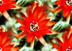 You are unique! (* landscape photographer *) Tags: stella italy europe awesome blossoms natura basilicata il bella della fiore amore vita unica senso mattino in lucania profumo francavilla respiro inseparabile emozione indispensabile nikond40 immenso flickraward sinni ebrezza salvyitaly