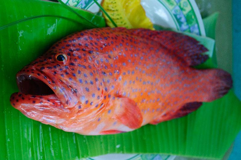 Lapu-Lapu Fish