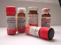 fosfatidilcoline