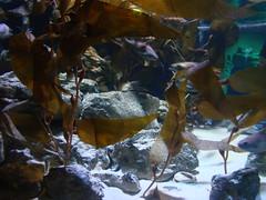 (ladyvandaiusch) Tags: london acquarium