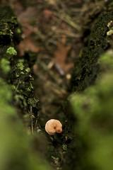 V (174/365) (Dr. RawheaD) Tags: brown tree green mushroom grass moss dof bokeh v fungus trunk 5d lichen shroom project365 project3661 nikonainikkor105mmf25
