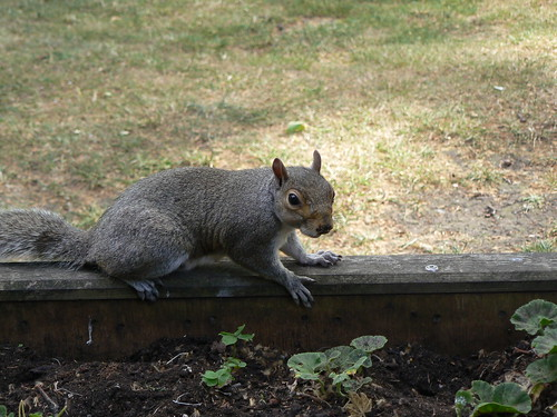 Squirr-ul