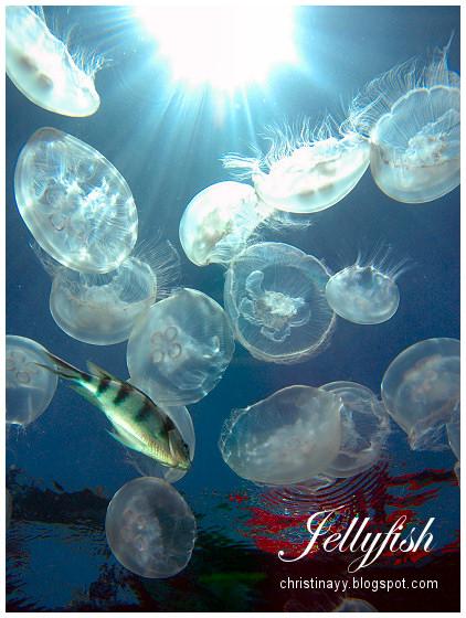Cairns: Jellyfish