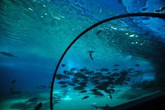 Maui Aquarium, Hawaii (KBI.Design Group) Tags: aquarium maui