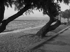 118 (LinaNoNoNo) Tags: ocean trees sea summer blackandwhite bw white black tree beach nature water beautiful outside outdoors greek bay blackwhite sand scenery waves greece sidewalk shore grecian summertime seashore pathway saltwater