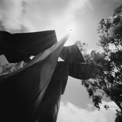 Lhain Noon - bl&wh version (art y fotos) Tags: trees sun 120 6x6 mediumformat hawaii oahu handmade bamboo pinhole homemade flare eucalyptus honolulu blacksun sculptures bambole manoa universityofhawaiiatmanoa bumpeiakaji kodakektar100 lahainanoon makaaeikeakuikeawawauluwehiinakuahiwiomanoa lebambolemkii
