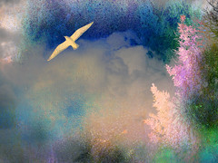 In the mists of time (Steve-h) Tags: pink blue trees cloud 6 white green photoshop grey gull elements finepix fujifilm visualart steveh picturepoems aplusphoto s100fs texturesgull