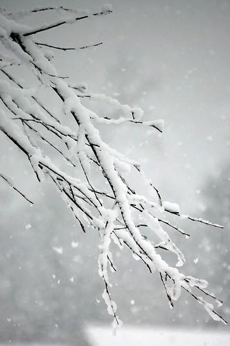 Snow 09 093
