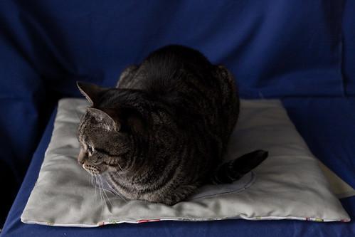 Mr Bun Finally Uses the Cat Quilt