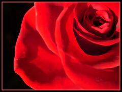 Per te, donna del 2009... (violaviola) Tags: ladies woman donne womansday festadelladonna 8marzo2009