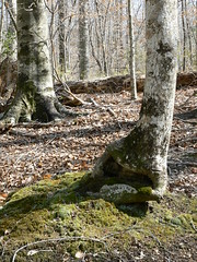 Merchant's Millpond State Park - Mossy Crevice