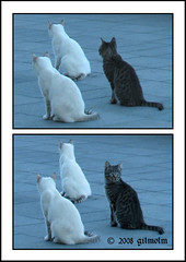 You are usually distracted! (gilmolm) Tags: sea italy animals rock cat photoshop canon italia mare latina 1001nights gatto gatti animali lazio scogli scauri minturno mywinners abigfave montedoro aplusphoto rubyphotographer canonpowershotsx110is dragonsdanger