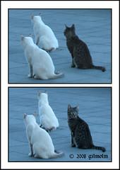 You are usually distracted! (gilmolm) Tags: sea italy animals rock cat photoshop canon italia mare latina 1001nights gatto gatti animali lazio scogli scauri minturno mywinners abigfave montedoro aplusphoto rubyphotographer canonpowershotsx110is dragonsdanger